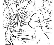 Coloriage et dessins gratuit Caneton et fleuve à imprimer