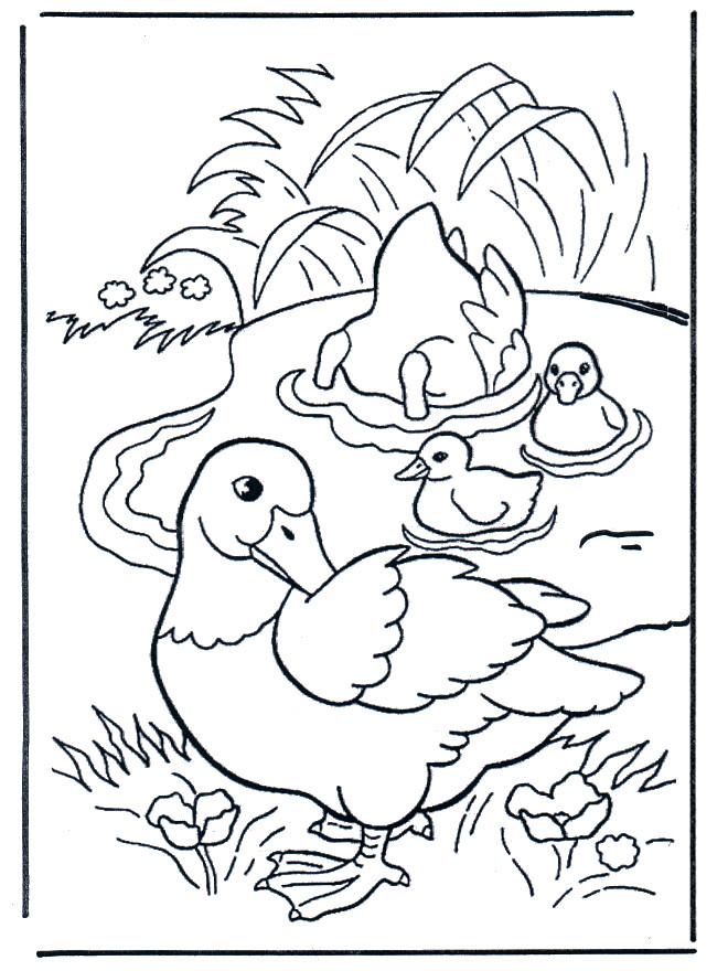 Coloriage et dessins gratuits Famille de Canard dans l'eau à imprimer