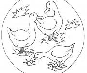 Coloriage Les canards