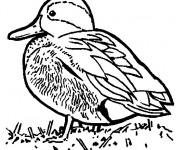 Coloriage et dessins gratuit Un petit canard à imprimer