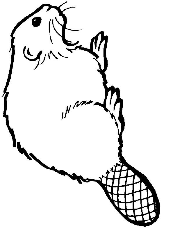 Coloriage et dessins gratuits Animal Castor à imprimer