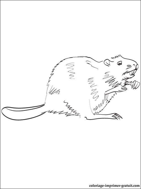 Coloriage et dessins gratuits Castor au crayon noir à imprimer