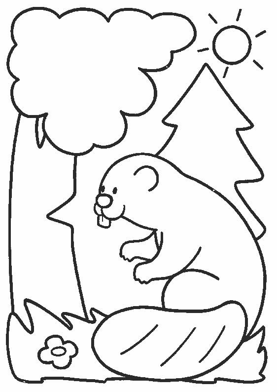 Coloriage et dessins gratuits Castor dans La Forêt à imprimer