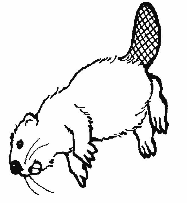 Coloriage et dessins gratuits Castor du Canada à imprimer