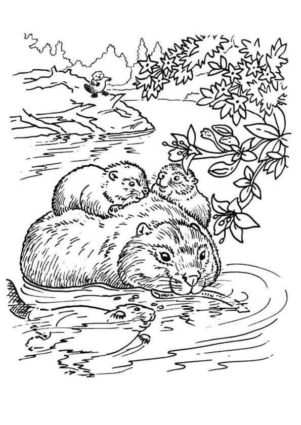 Coloriage et dessins gratuits Castor en Famille à imprimer