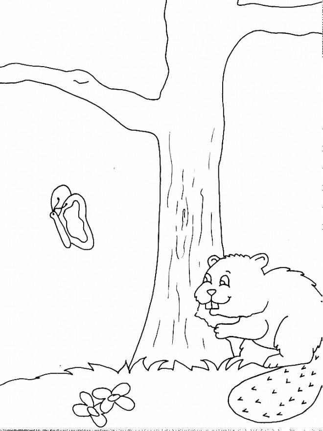 Coloriage et dessins gratuits Castor et Papillon à imprimer