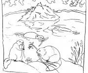 Coloriage et dessins gratuit Castors dans la nature à imprimer