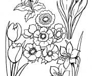 Coloriage et dessins gratuit Champs fleuré à imprimer
