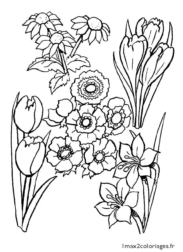 Coloriage et dessins gratuits Champs fleuré à imprimer
