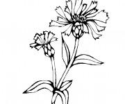 Coloriage et dessins gratuit Champs plantes à imprimer
