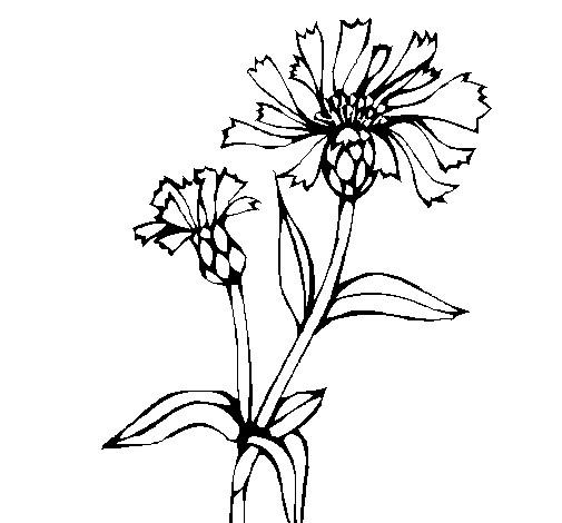 Coloriage et dessins gratuits Champs plantes à imprimer