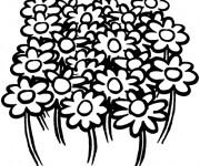 Coloriage et dessins gratuit Fleurs de Champs à imprimer