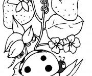 Coloriage Coccinelle sur une plante