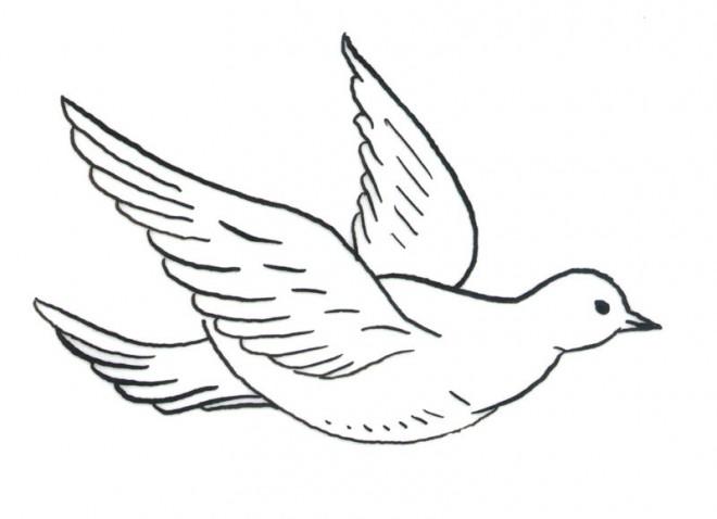 Coloriage colombe 3 dessin gratuit imprimer - Colombe coloriage ...