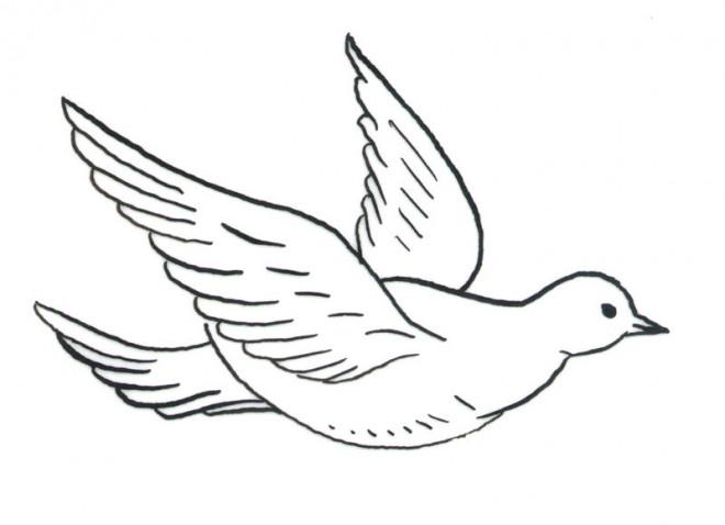 Coloriage colombe en vol dessin gratuit imprimer - Dessin de colombe a imprimer ...