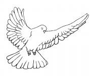 Coloriage Colombe qui ouvre ses ailes pour enfant