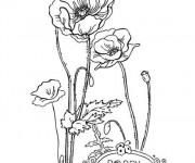 Coloriage Belle Fleur Coquelicot