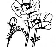 Coloriage dessin  Coquelicot 12