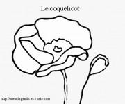 Coloriage dessin  Coquelicot 3