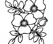 Coloriage et dessins gratuit Coquelicot à décorer à imprimer