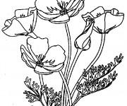 Coloriage et dessins gratuit Coquelicot au jardin à imprimer