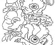 Coloriage et dessins gratuit Coquelicot en Printemps à imprimer