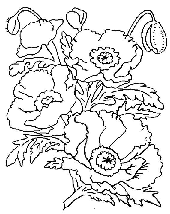 Coloriage Coquelicot en Printemps dessin gratuit à imprimer