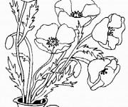 Coloriage et dessins gratuit Coquelicot et Papillon à imprimer