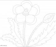Coloriage Coquelicot et ses feuilles