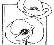 Coloriage et dessins gratuit Coquelicot facile à imprimer