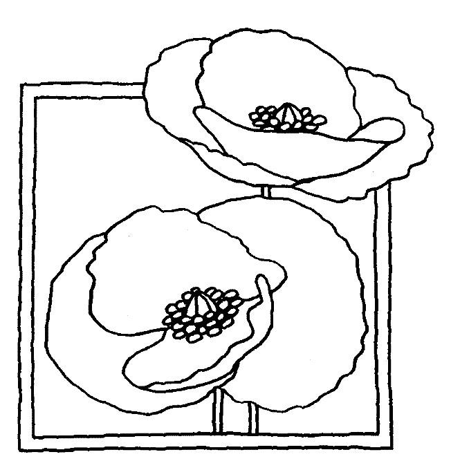 Coloriage Coquelicot facile dessin gratuit à imprimer