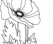 Coloriage Coquelicot Fleur