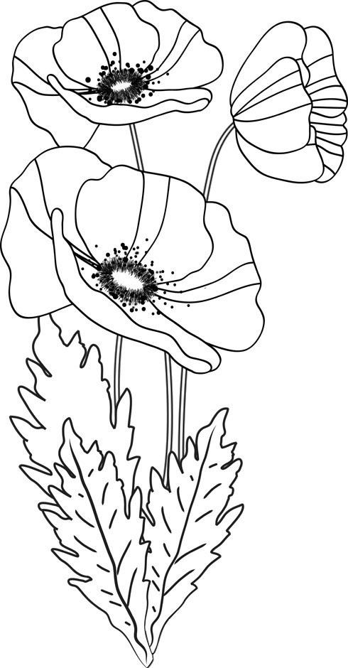 coloriage coquelicot fleur dessin gratuit imprimer. Black Bedroom Furniture Sets. Home Design Ideas