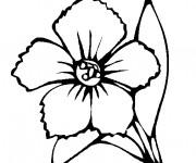 Coloriage Coquelicot Fleuri superbe