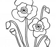 Coloriage Coquelicot Floraison