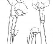 Coloriage et dessins gratuit Coquelicot maternelle à imprimer