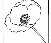 Coloriage Coquelicot simple