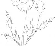 Coloriage et dessins gratuit Coquelicot stylisé à imprimer