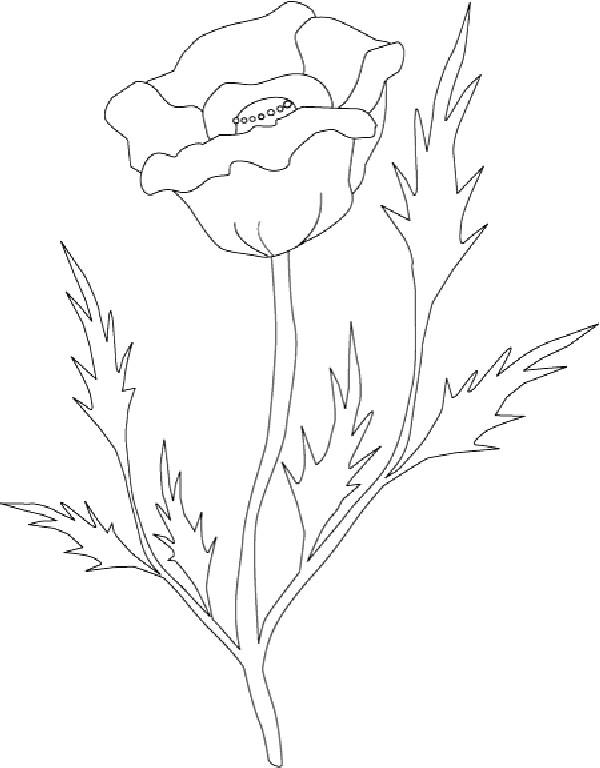 Coloriage et dessins gratuits Coquelicot stylisé à imprimer