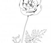 Coloriage et dessins gratuit Coquelicot vecteur à imprimer