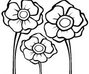 Coloriage Coquelicots dessin facile