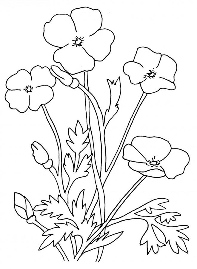 Coloriage et dessins gratuits Fleur et Plante à imprimer