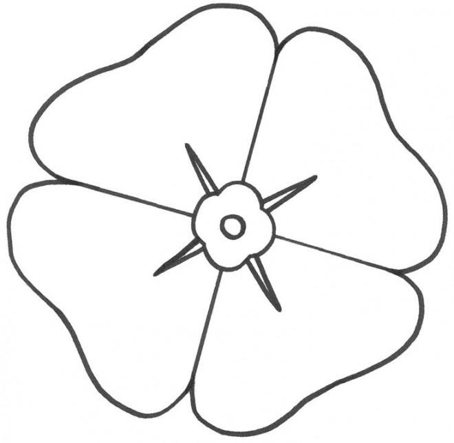Coloriage Fleur Simple De Coquelicot Dessin Gratuit à Imprimer