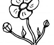 Coloriage Floraison de Coquelicot en Printemps