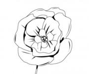 Coloriage La Fleur de Coquelicot