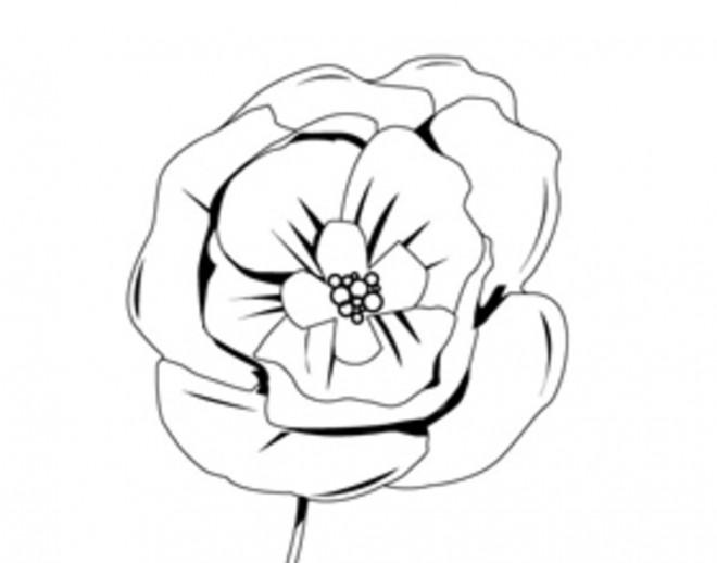 Coloriage et dessins gratuits La Fleur de Coquelicot à imprimer