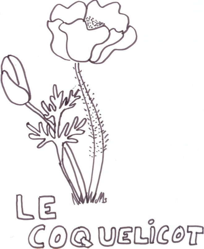 Coloriage et dessins gratuits Le Coquelicot en bleu à imprimer