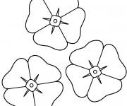 Coloriage Les fleurs Coquelicot