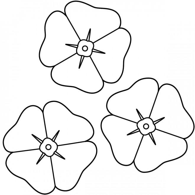 Coloriage et dessins gratuits Les fleurs Coquelicot à imprimer
