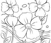 Coloriage Plante Coquelicot fleurie